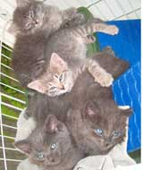 kittens for adoption from covina, ca